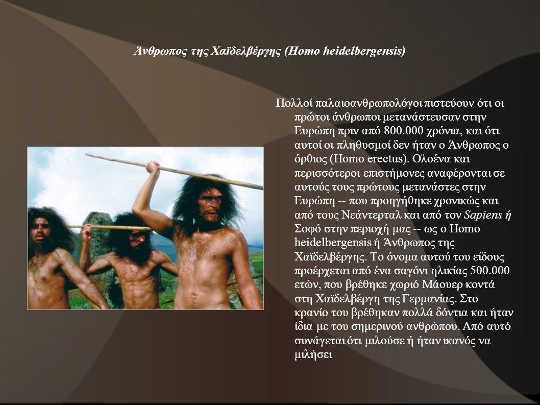 Άνθρωπος της Χαϊδελβέργης (Homo heidelbergensis)