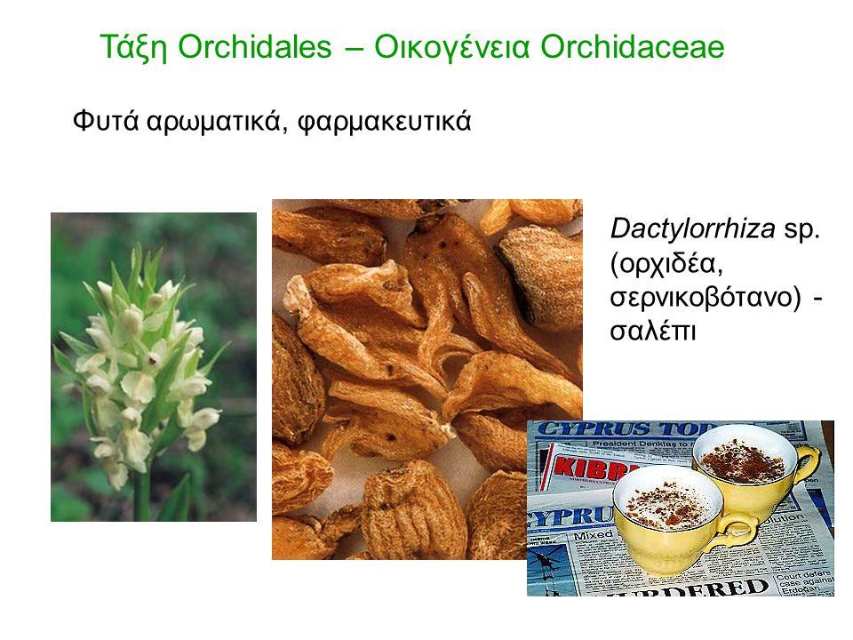 Τάξη Orchidales – Οικογένεια Orchidaceae