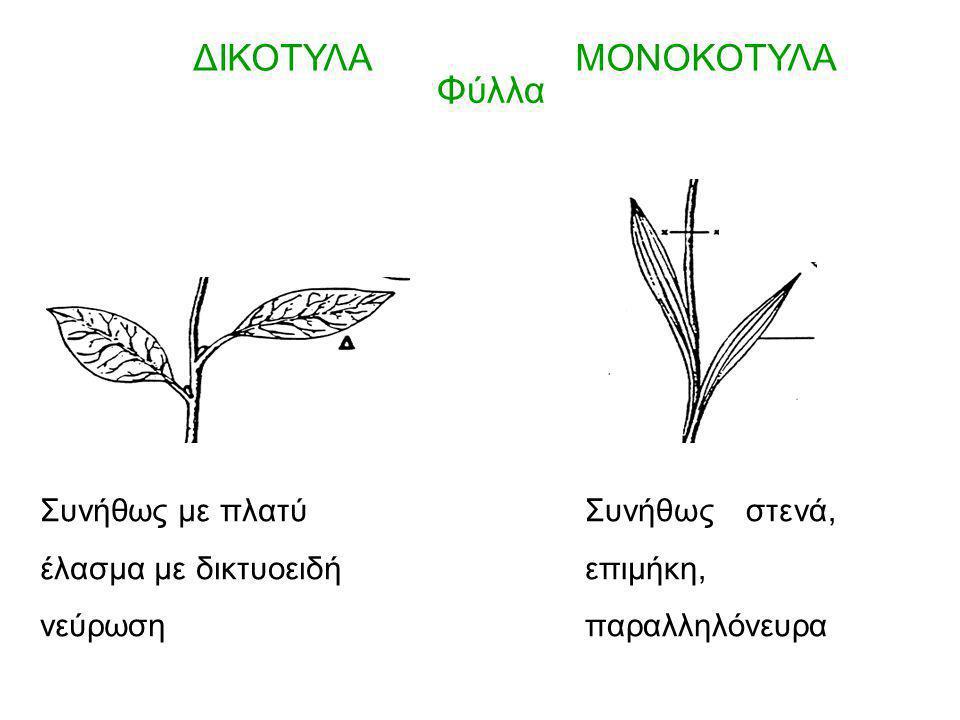 ΔΙΚΟΤΥΛΑ ΜΟΝΟΚΟΤΥΛΑ Φύλλα