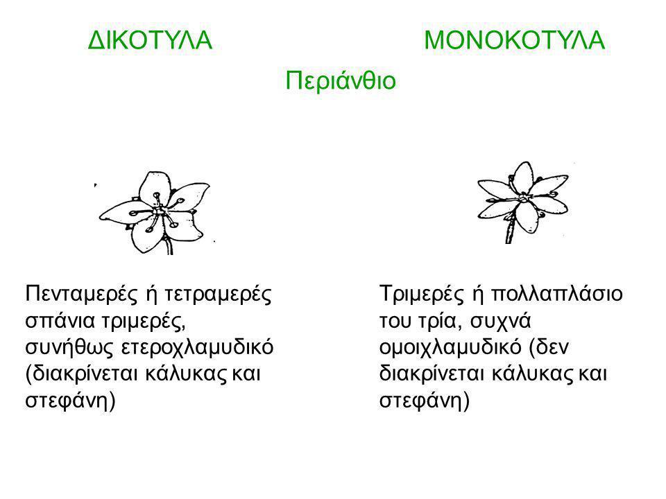ΔΙΚΟΤΥΛΑ ΜΟΝΟΚΟΤΥΛΑ Περιάνθιο