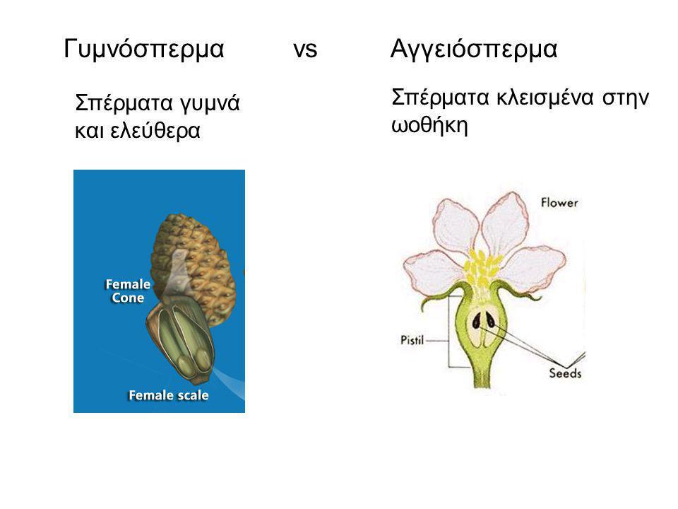 Γυμνόσπερμα vs Αγγειόσπερμα