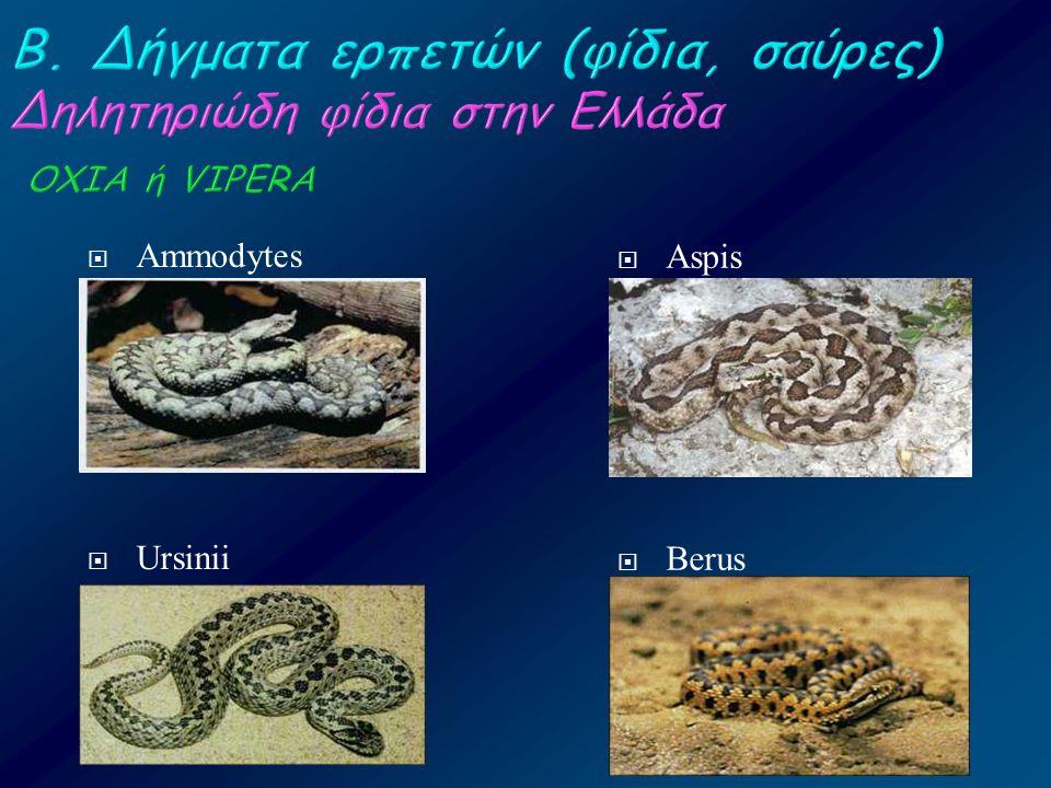 Β. Δήγματα ερπετών (φίδια, σαύρες) Δηλητηριώδη φίδια στην Ελλάδα ΟΧΙΑ ή VIPERA