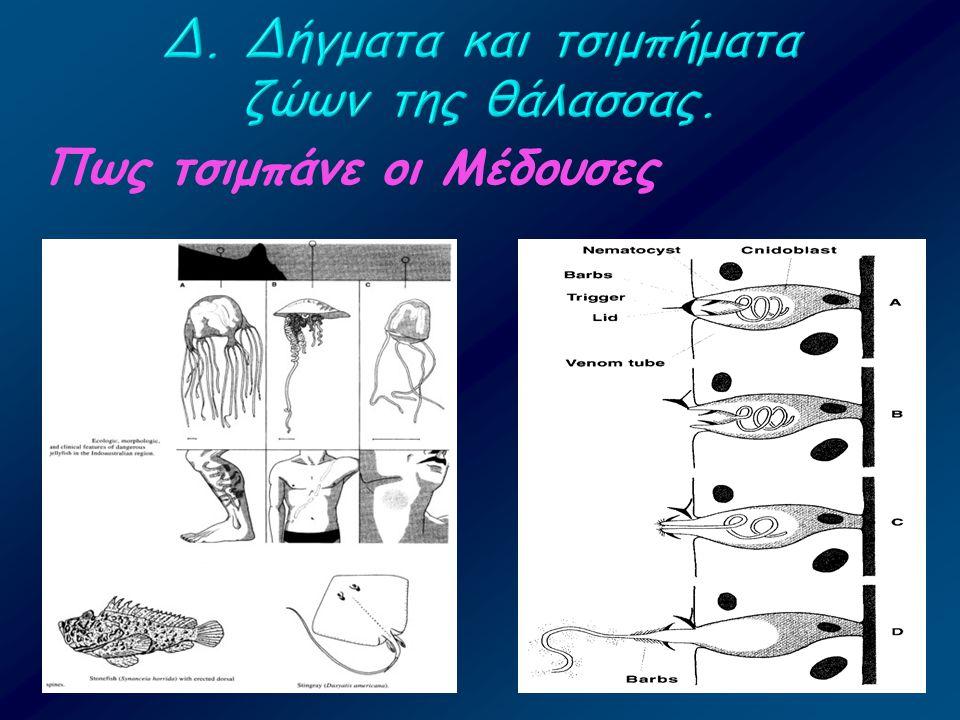 Δ. Δήγματα και τσιμπήματα ζώων της θάλασσας.