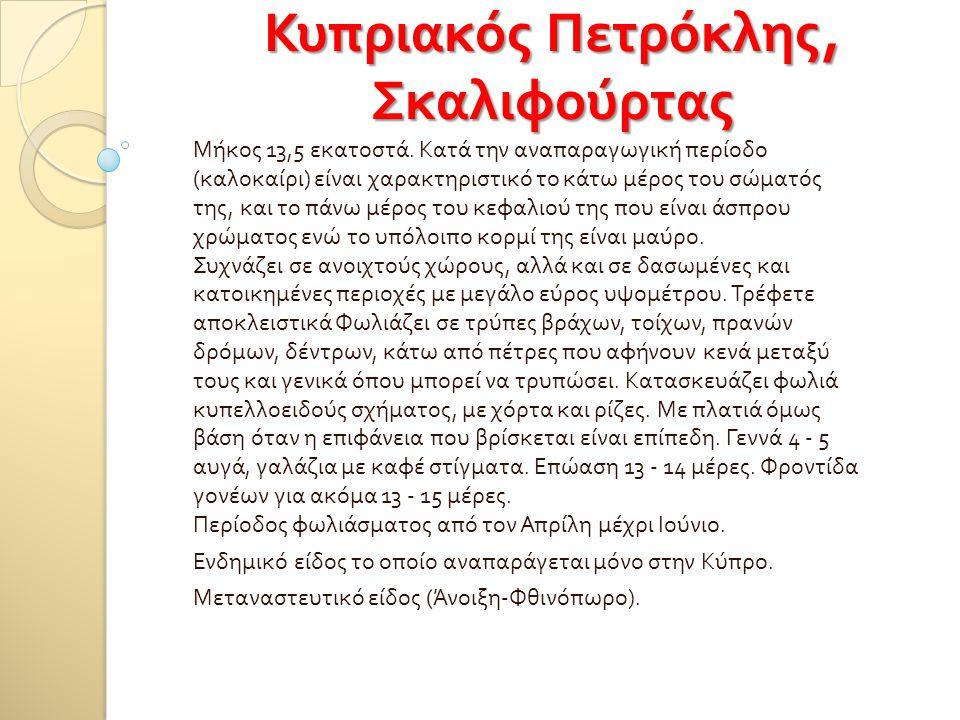Κυπριακός Πετρόκλης, Σκαλιφούρτας