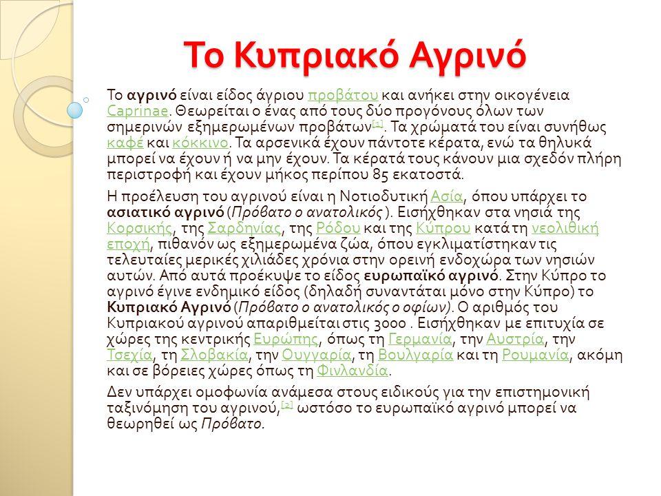 Το Κυπριακό Αγρινό