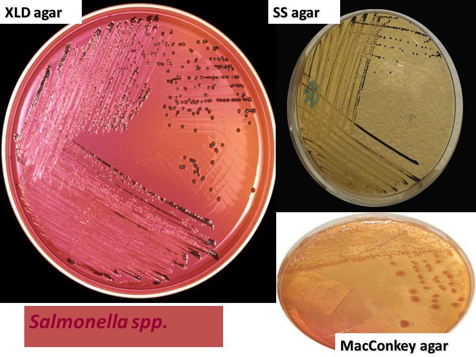XLD agar SS agar Salmonella spp. MacConkey agar