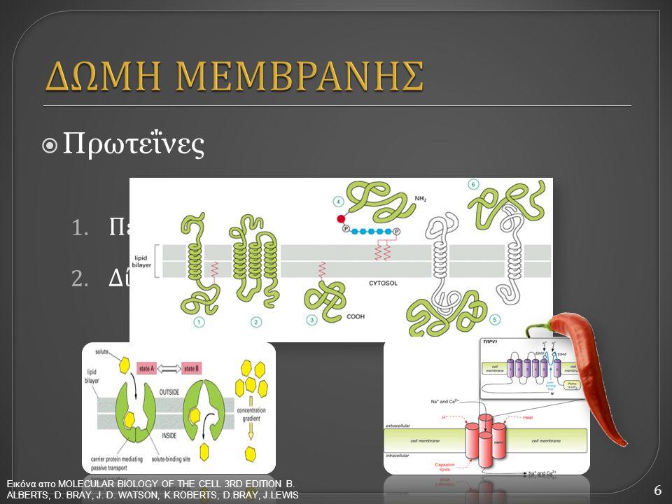 ΔΩΜΗ ΜΕΜΒΡΑΝΗΣ Πρωτεΐνες Περμεάσες (μεταφορικές πρωτεΐνες) Δίαυλοι