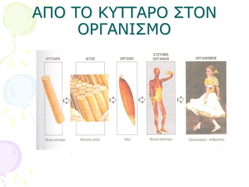 ΑΠΟ ΤΟ ΚΥΤΤΑΡΟ ΣΤΟΝ ΟΡΓΑΝΙΣΜΟ