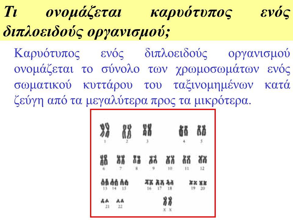 Τι ονομάζεται καρυότυπος ενός διπλοειδούς οργανισμού;