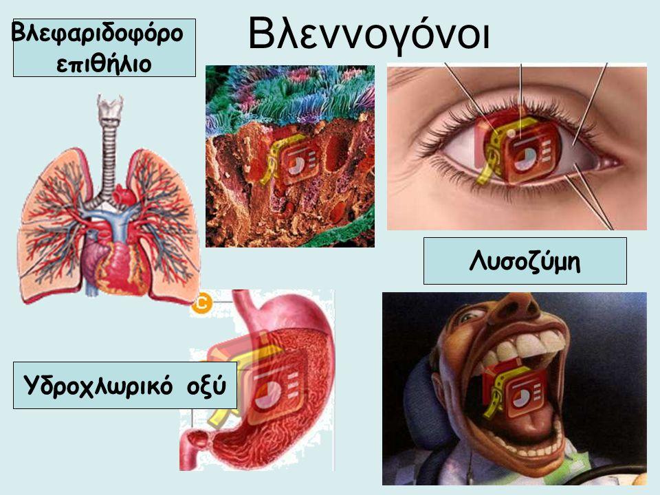 Βλεννογόνοι Βλεφαριδοφόρο επιθήλιο Λυσοζύμη Υδροχλωρικό οξύ