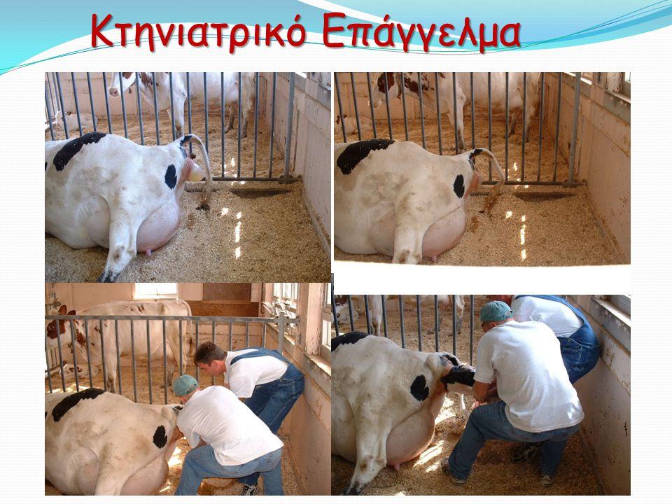 Κτηνιατρικό Επάγγελμα