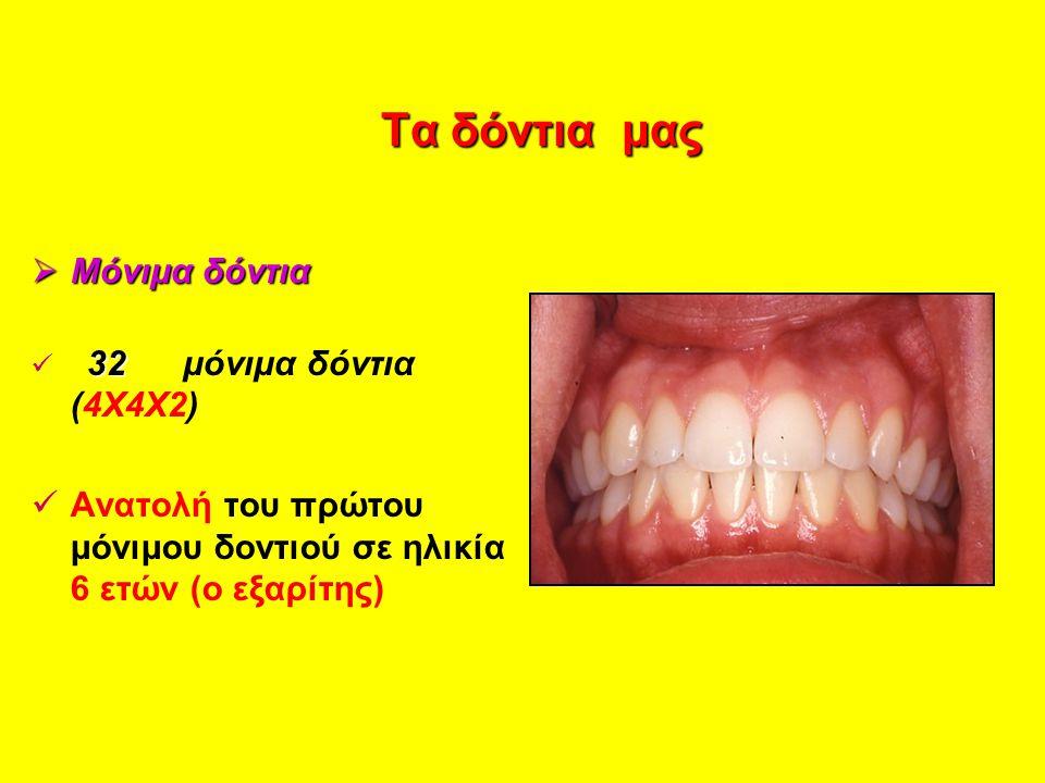Τα δόντια μας Μόνιμα δόντια
