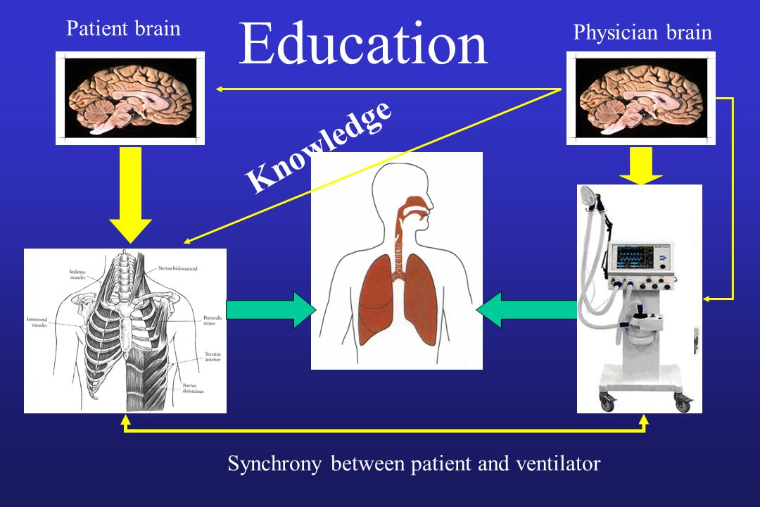 Education Knowledge Patient brain Physician brain