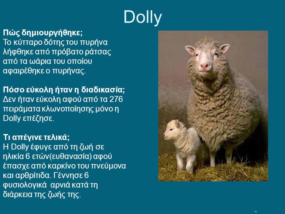 Dolly Πώς δημιουργήθηκε;