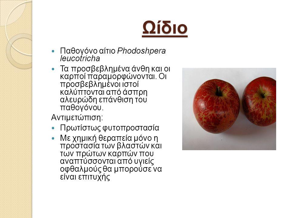 Ωίδιο Παθογόνο αίτιο Phodoshpera leucotricha