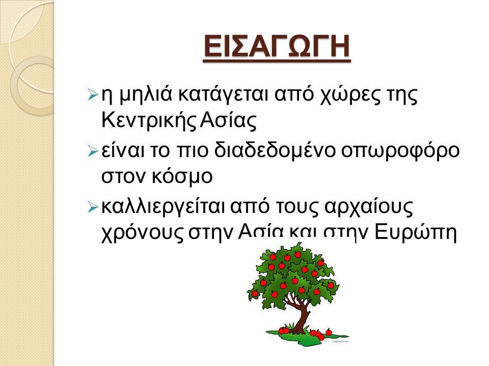 ΕΙΣΑΓΩΓΗ η μηλιά κατάγεται από χώρες της Κεντρικής Ασίας