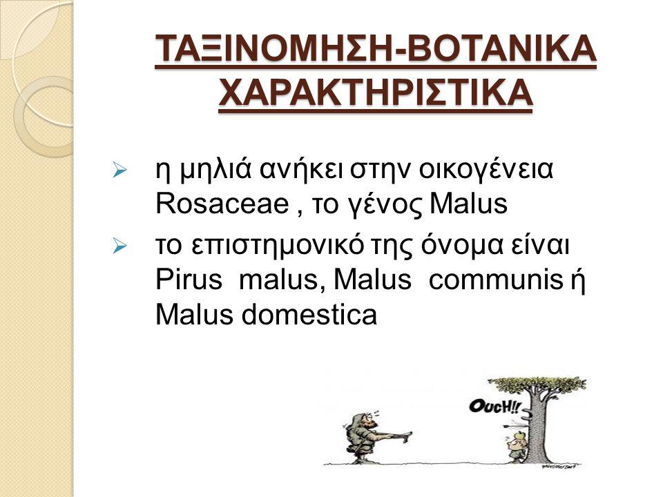 ΤΑΞΙΝΟΜΗΣΗ-ΒΟΤΑΝΙΚΑ ΧΑΡΑΚΤΗΡΙΣΤΙΚΑ