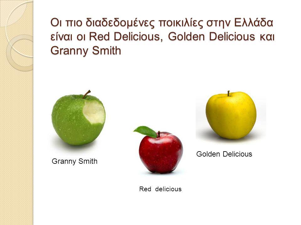 Οι πιο διαδεδομένες ποικιλίες στην Ελλάδα είναι οι Red Delicious, Golden Delicious και Granny Smith