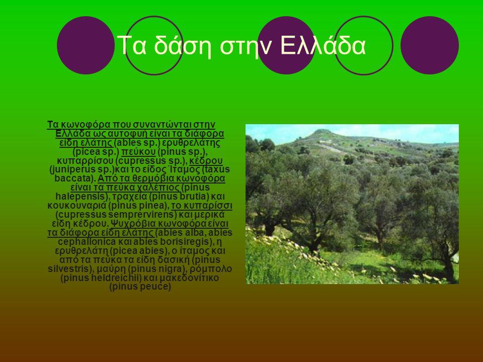 Τα δάση στην Ελλάδα