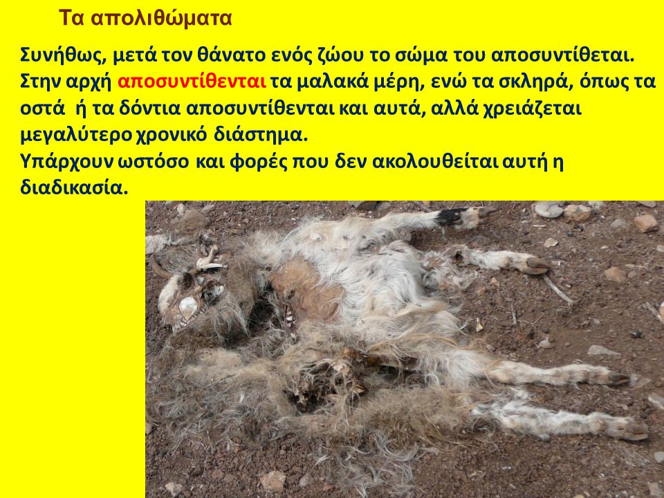 Συνήθως, μετά τον θάνατο ενός ζώου το σώμα του αποσυντίθεται.