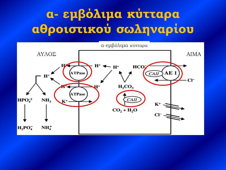 α- εμβόλιμα κύτταρα αθροιστικού σωληναρίου
