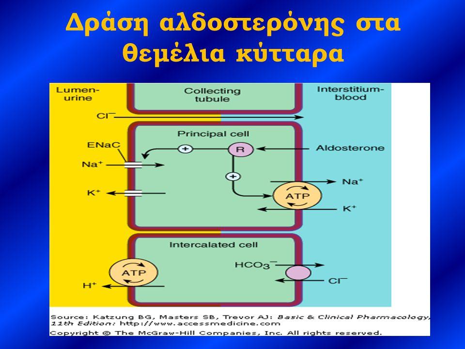 Δράση αλδοστερόνης στα θεμέλια κύτταρα