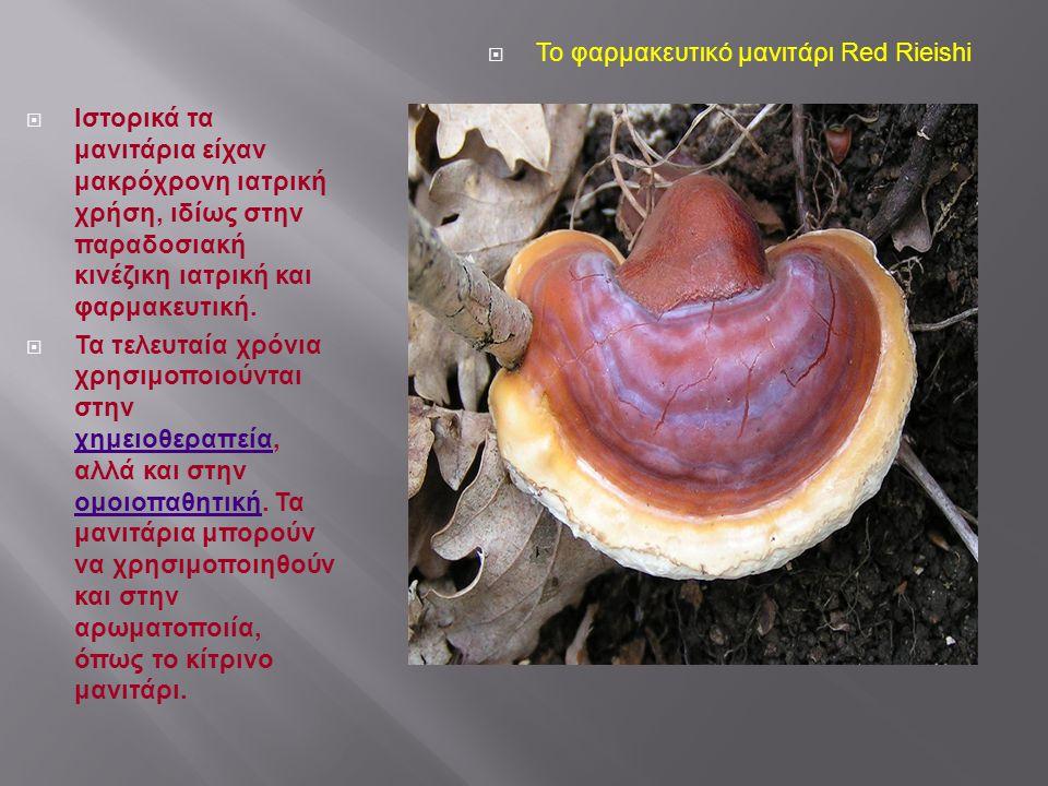 Το φαρμακευτικό μανιτάρι Red Rieishi