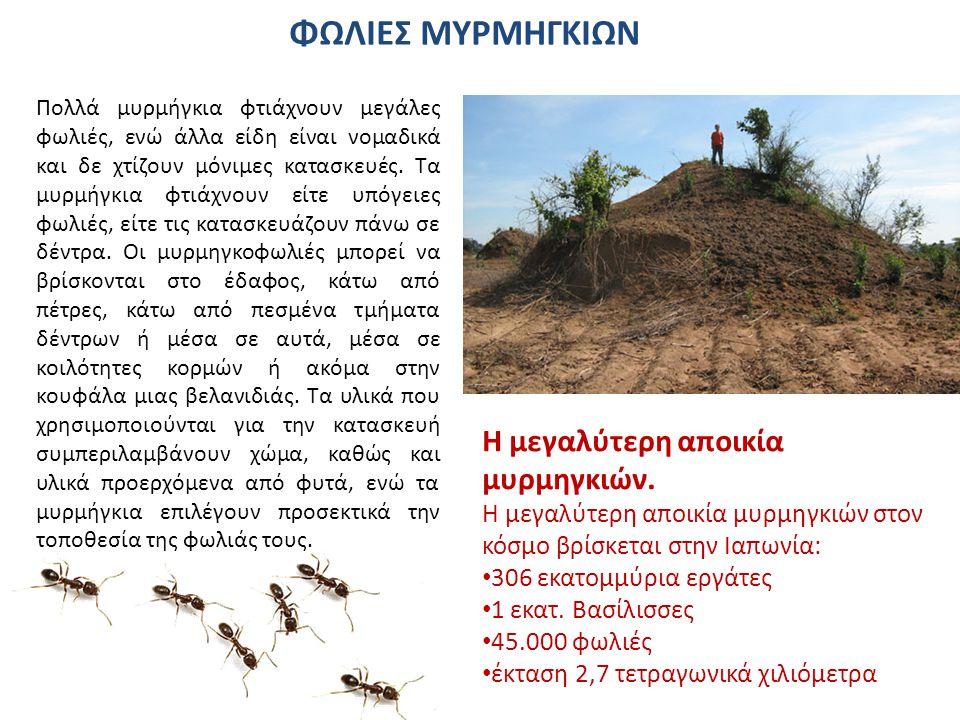 ΦΩΛΙΕΣ ΜΥΡΜΗΓΚΙΩΝ Η μεγαλύτερη αποικία μυρμηγκιών.