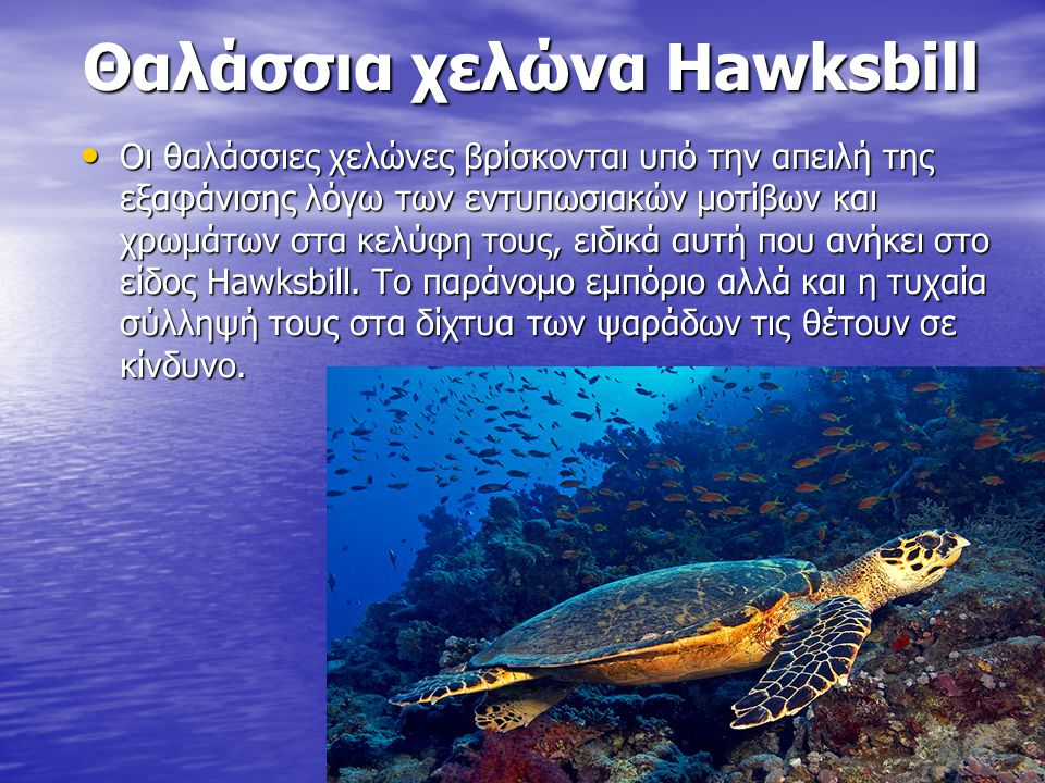 Θαλάσσια χελώνα Hawksbill