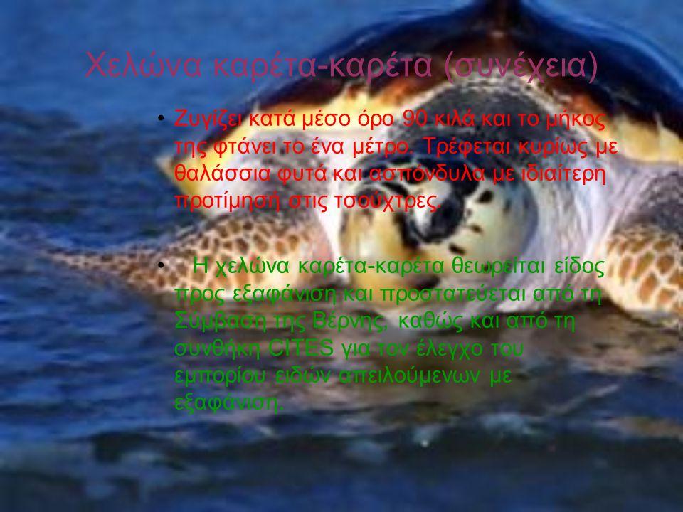 Χελώνα καρέτα-καρέτα (συνέχεια)