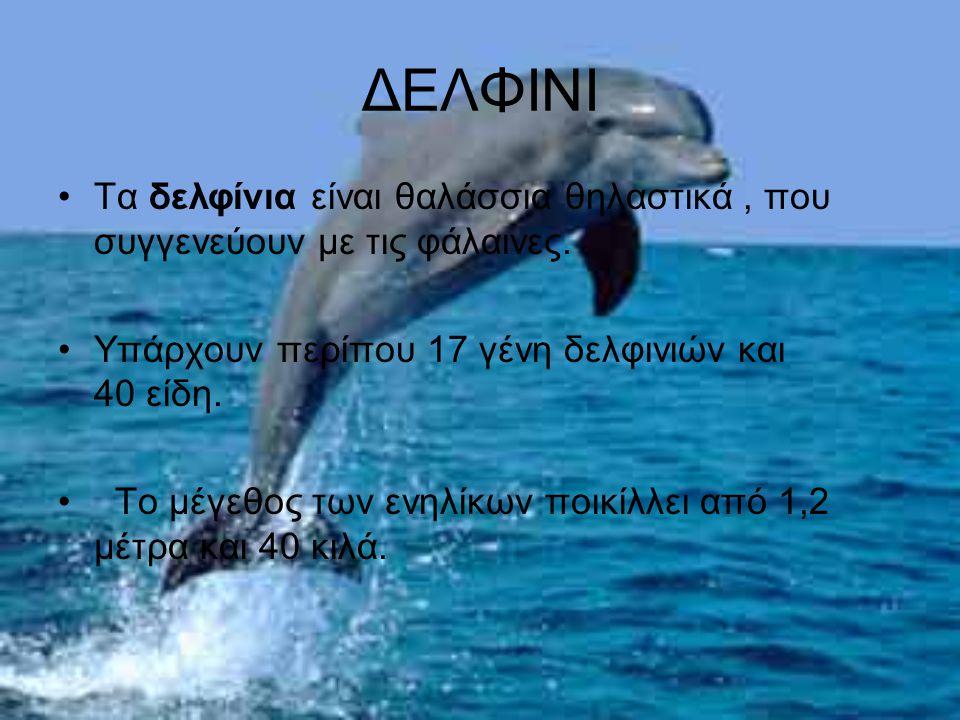 ΔΕΛΦΙΝΙ Τα δελφίνια είναι θαλάσσια θηλαστικά , που συγγενεύουν με τις φάλαινες. Υπάρχουν περίπου 17 γένη δελφινιών και 40 είδη.
