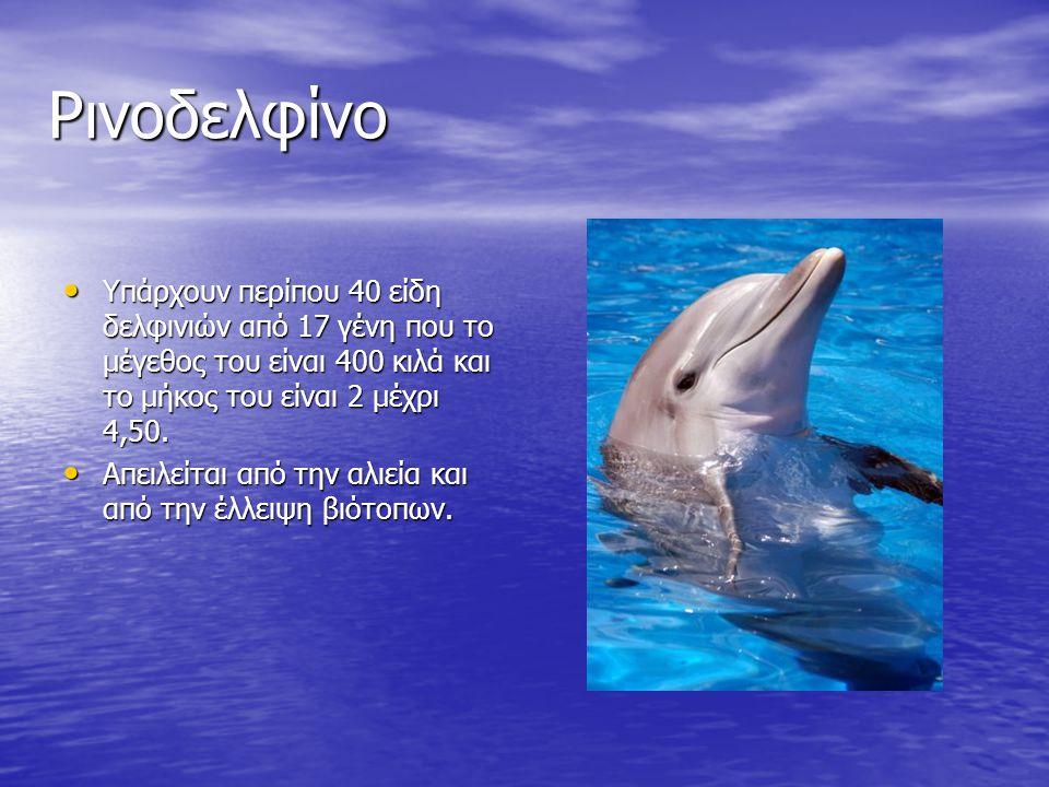 Ρινοδελφίνο Υπάρχουν περίπου 40 είδη δελφινιών από 17 γένη που το μέγεθος του είναι 400 κιλά και το μήκος του είναι 2 μέχρι 4,50.