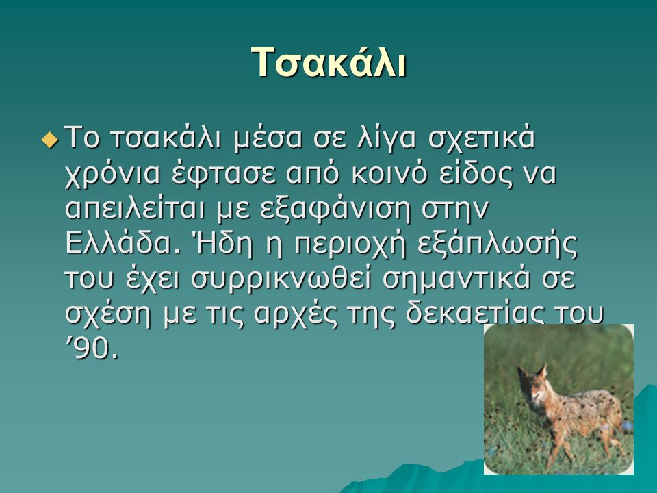 Tσακάλι