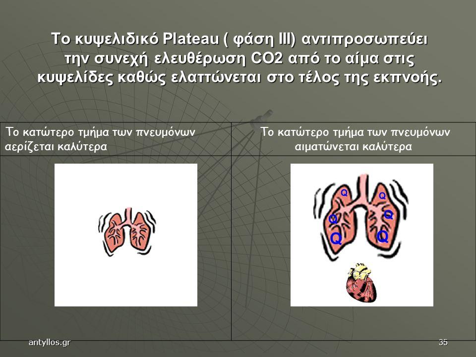Το κατώτερο τμήμα των πνευμόνων αιματώνεται καλύτερα