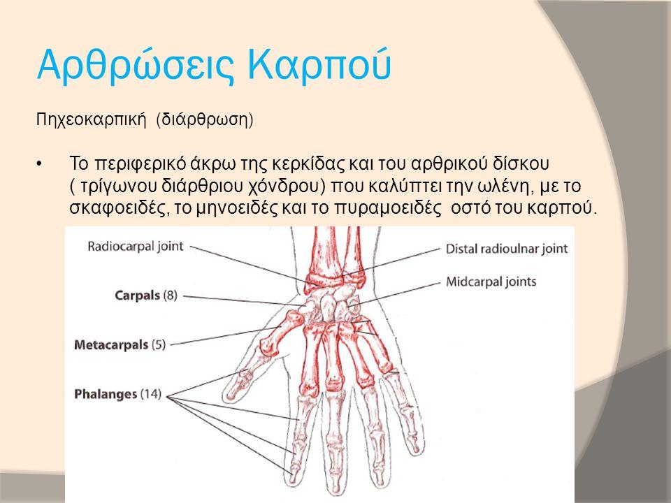 Αρθρώσεις Καρπού Πηχεοκαρπική (διάρθρωση)