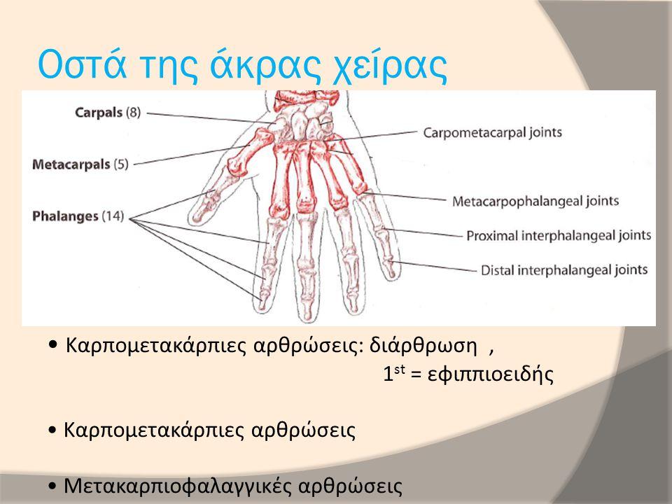 Οστά της άκρας χείρας Καρπομετακάρπιες αρθρώσεις: διάρθρωση ,