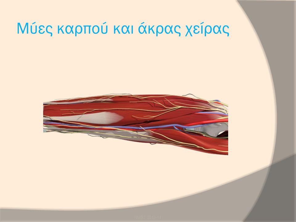 Μύες καρπού και άκρας χείρας