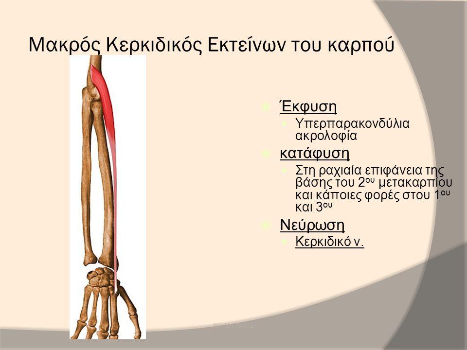 Μακρός Κερκιδικός Εκτείνων του καρπού