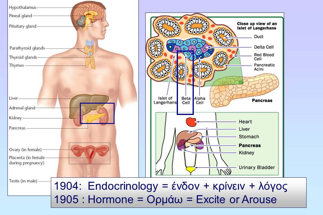 1904: Endocrinology = ένδον + κρίνειν + λόγος