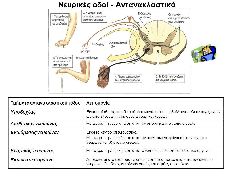 Νευρικές οδοί - Αντανακλαστικά