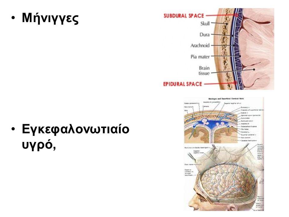 Μήνιγγες Εγκεφαλονωτιαίο υγρό,