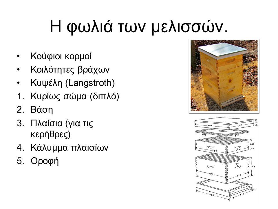 Η φωλιά των μελισσών. Κούφιοι κορμοί Κοιλότητες βράχων
