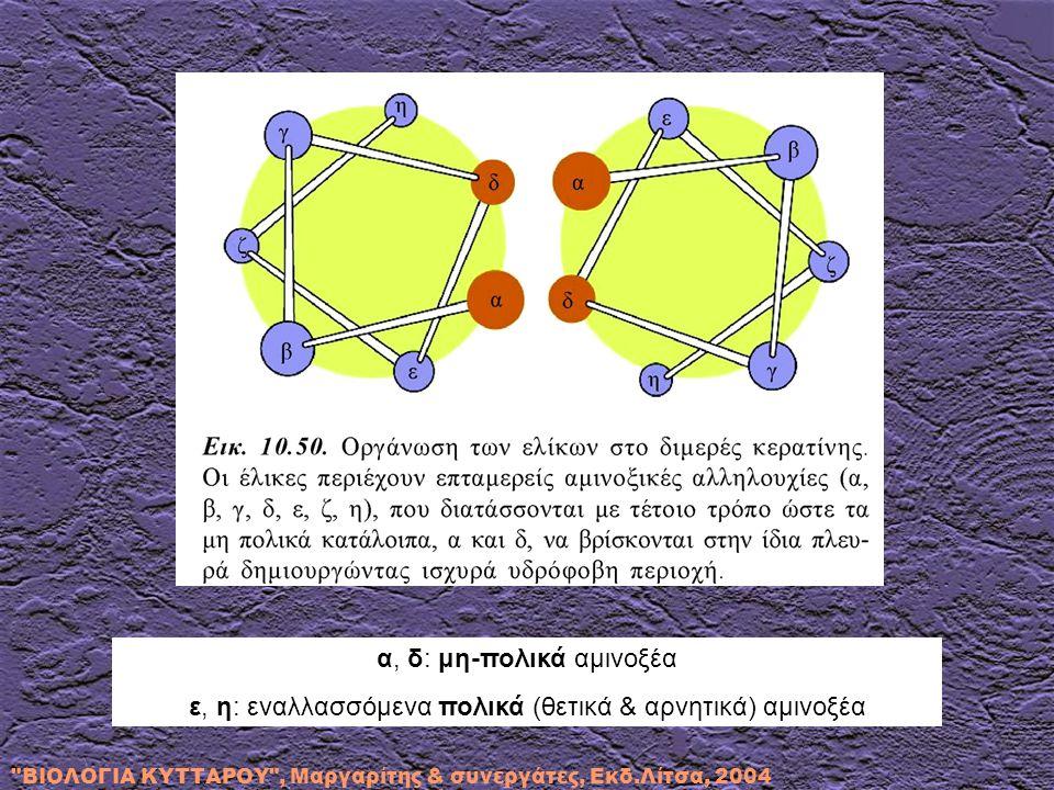 α, δ: μη-πολικά αμινοξέα