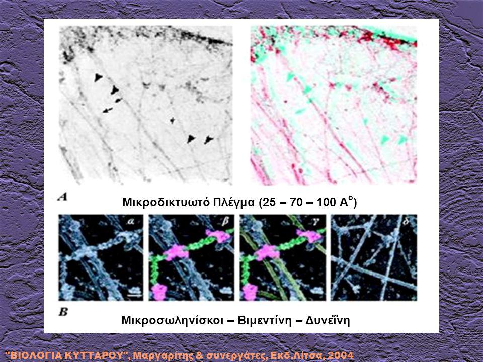 Μικροδικτυωτό Πλέγμα (25 – 70 – 100 Αο)