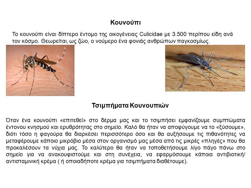 Τσιμπήματα Κουνουπιών