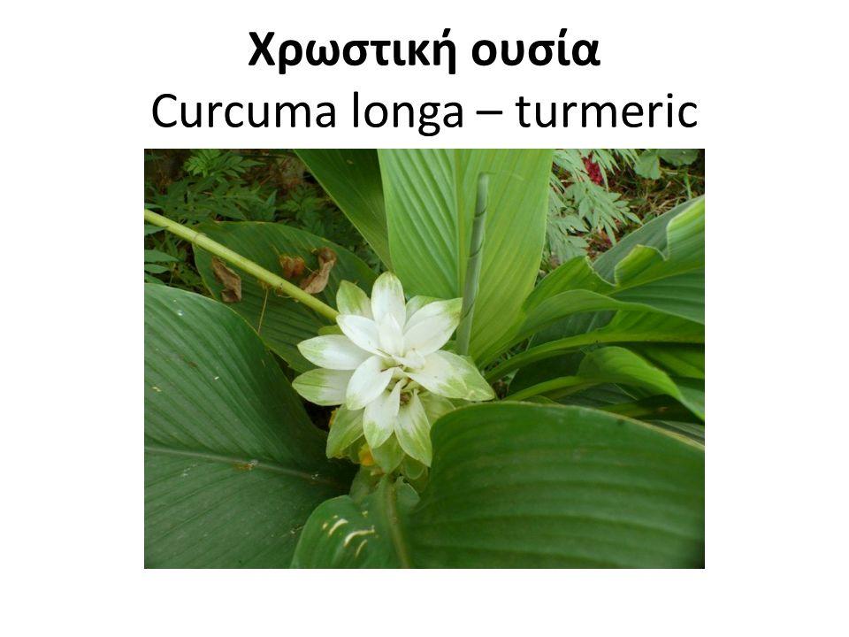 Χρωστική ουσία Curcuma longa – turmeric