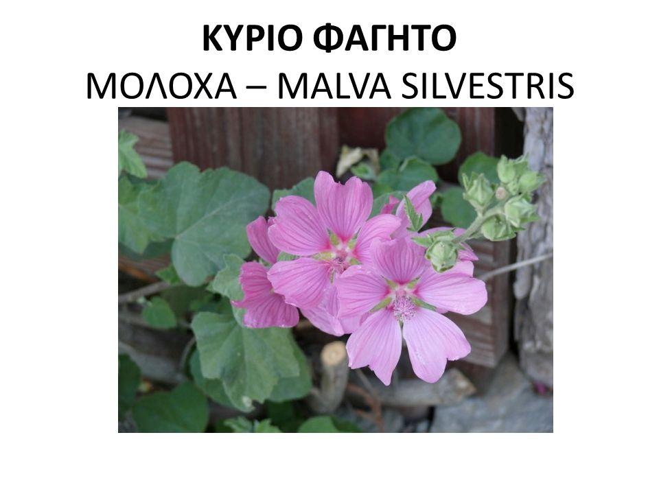 ΚΥΡΙΟ ΦΑΓΗΤΟ ΜΟΛΟΧΑ – MALVA SILVESTRIS