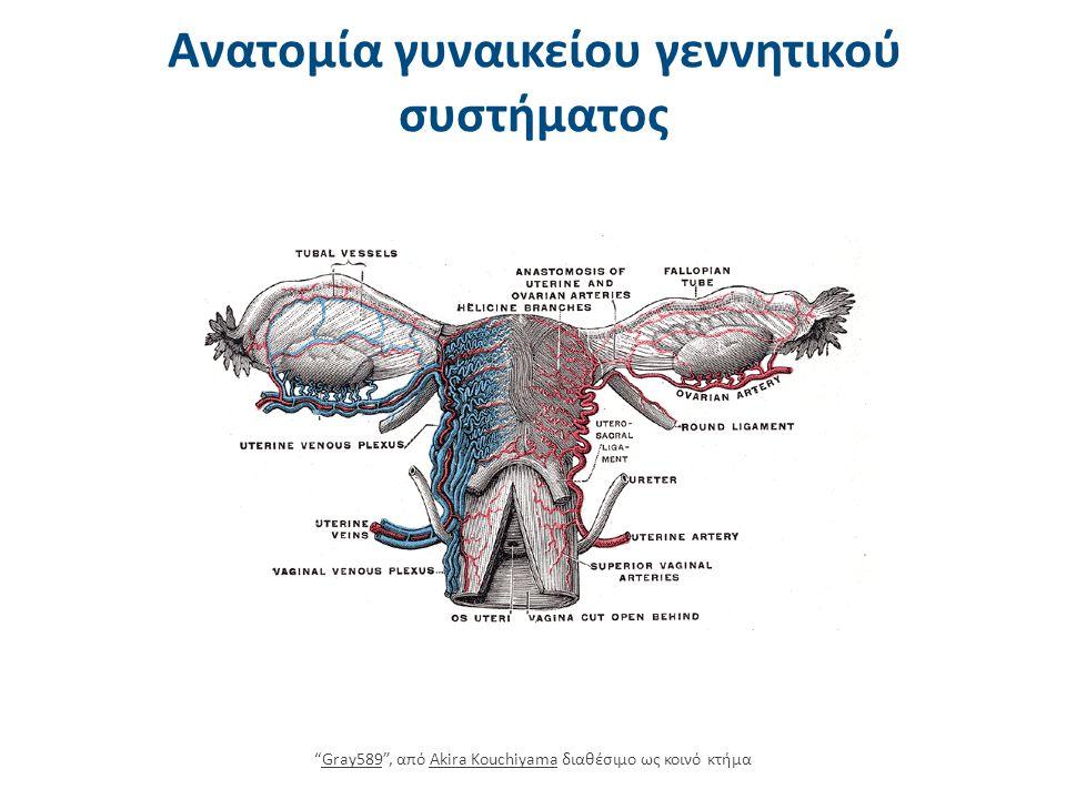 Ovaries , από Anatomist90 διαθέσιμο με άδεια CC BY-SA 3.0