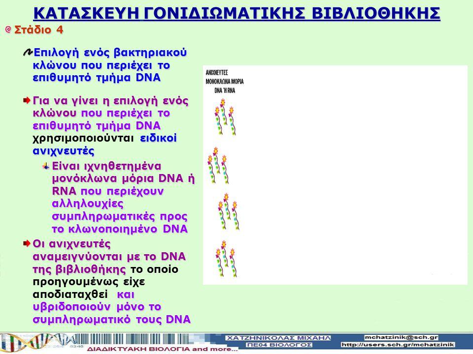 KATAΣΚΕΥΗ ΓΟΝΙΔΙΩΜΑΤΙΚΗΣ ΒΙΒΛΙΟΘΗΚΗΣ