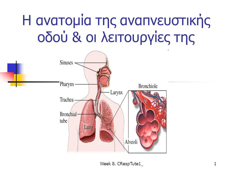 Η ανατομία της αναπνευστικής οδού & οι λειτουργίες της